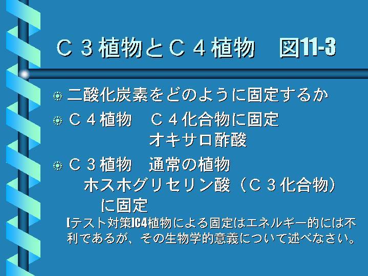 C3植物とC4植物 図11-3